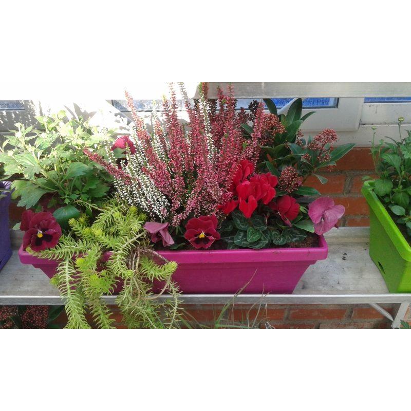 Acheter jardini re avec cyclamen pas cher for Jardiniere d automne