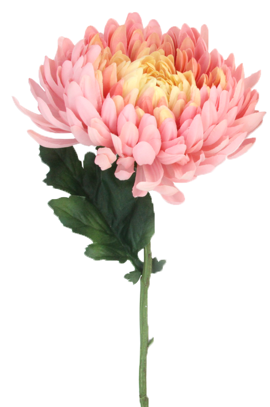 branche de chrysantheme