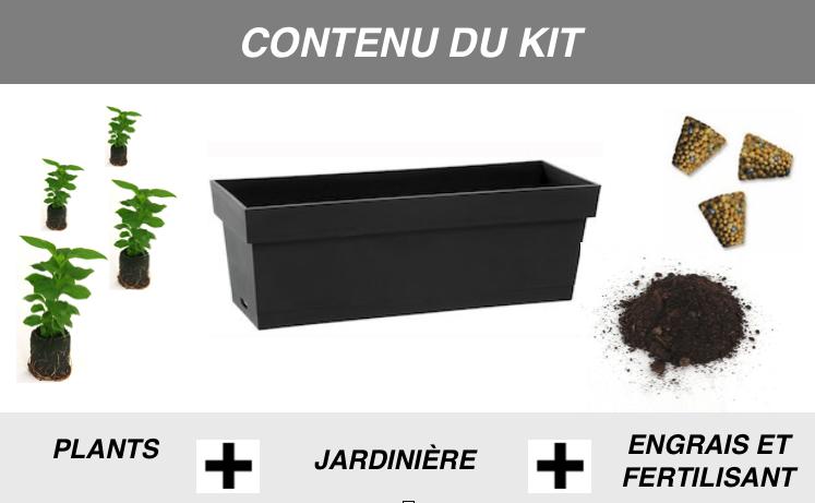 contenu kit de plante