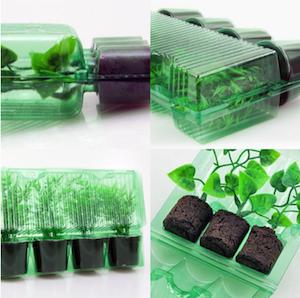 emballage plante coclicoh