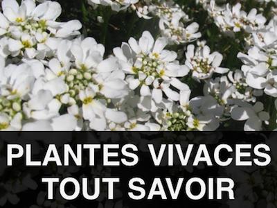 choisir Plantes vivaces