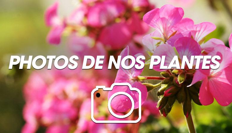 Photos de plantes