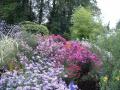 Plantes qui fleurissent toute l'année