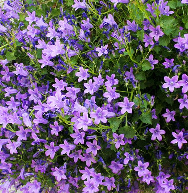 Coclicoh les plantes vivaces c est le moment de les for Les plantes vivaces