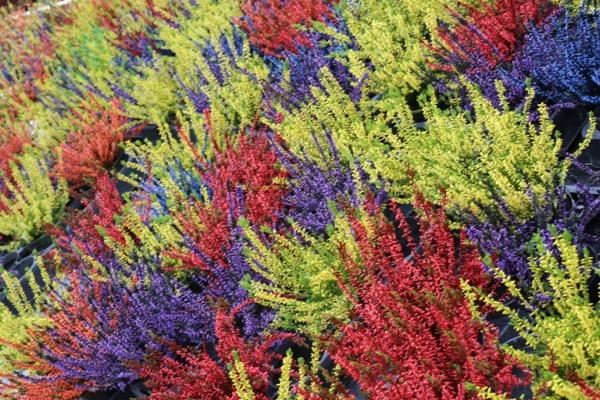 Coclicoh photos de plantes d 39 automne - Plantes fleuries d automne ...