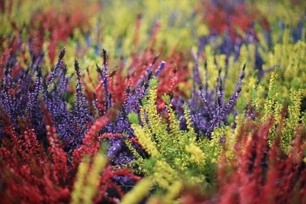 photos de plantes sur coclicoh