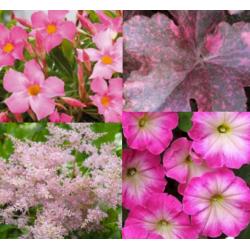 Astilbe, Heuchère, Petunia, Dipladenia
