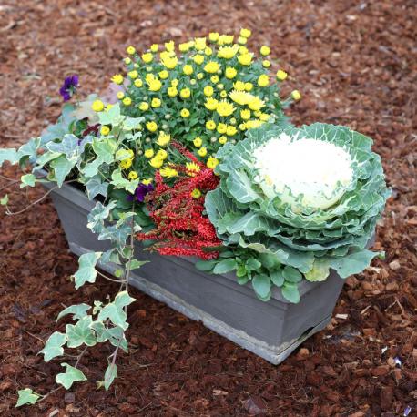 acheter jardini re pens e heuch re lierre chrysanth me pas cher. Black Bedroom Furniture Sets. Home Design Ideas