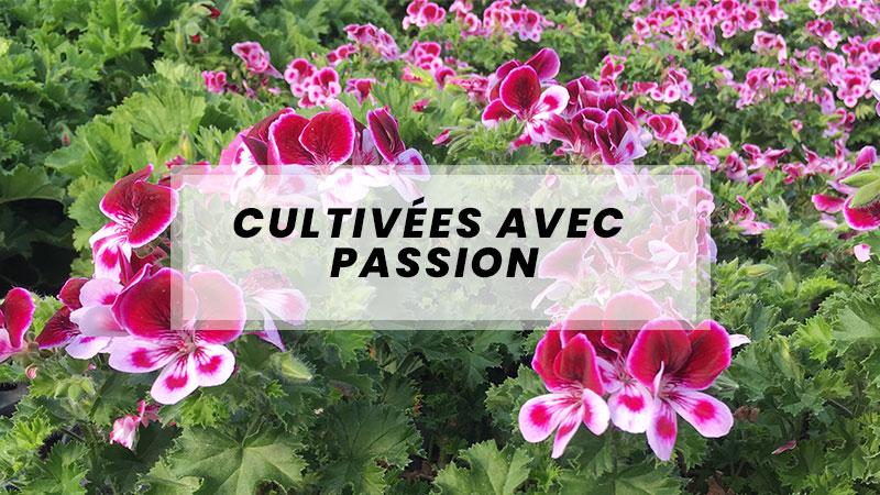 plantes cultivees avec passion